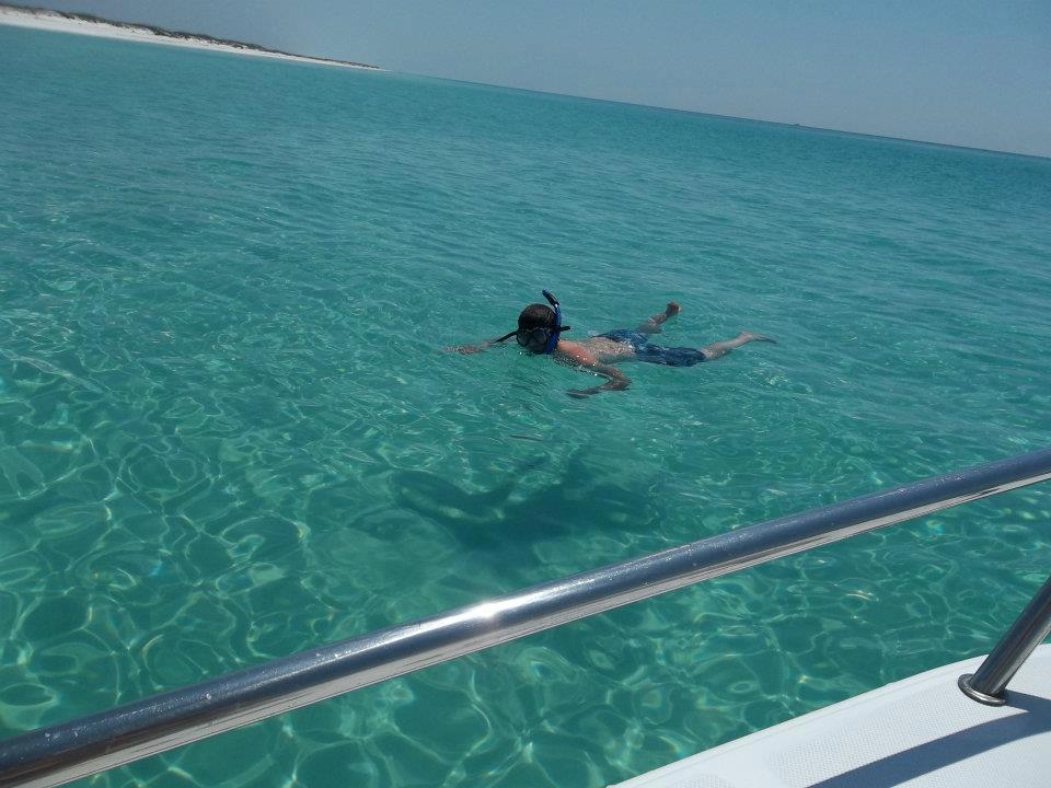 Panama City Beach Dolphin Tours Swim With Dolphins